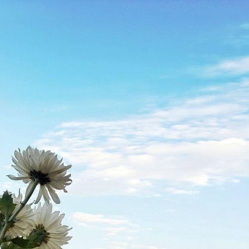 美好的時光 舉目望去這佇立於冬日的天空 我想不知不覺睡到十二月清早
