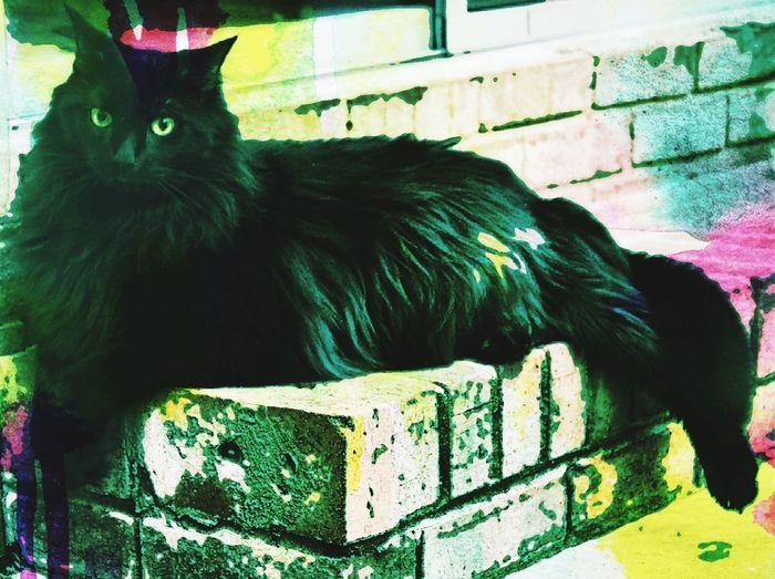 Retro Cat...