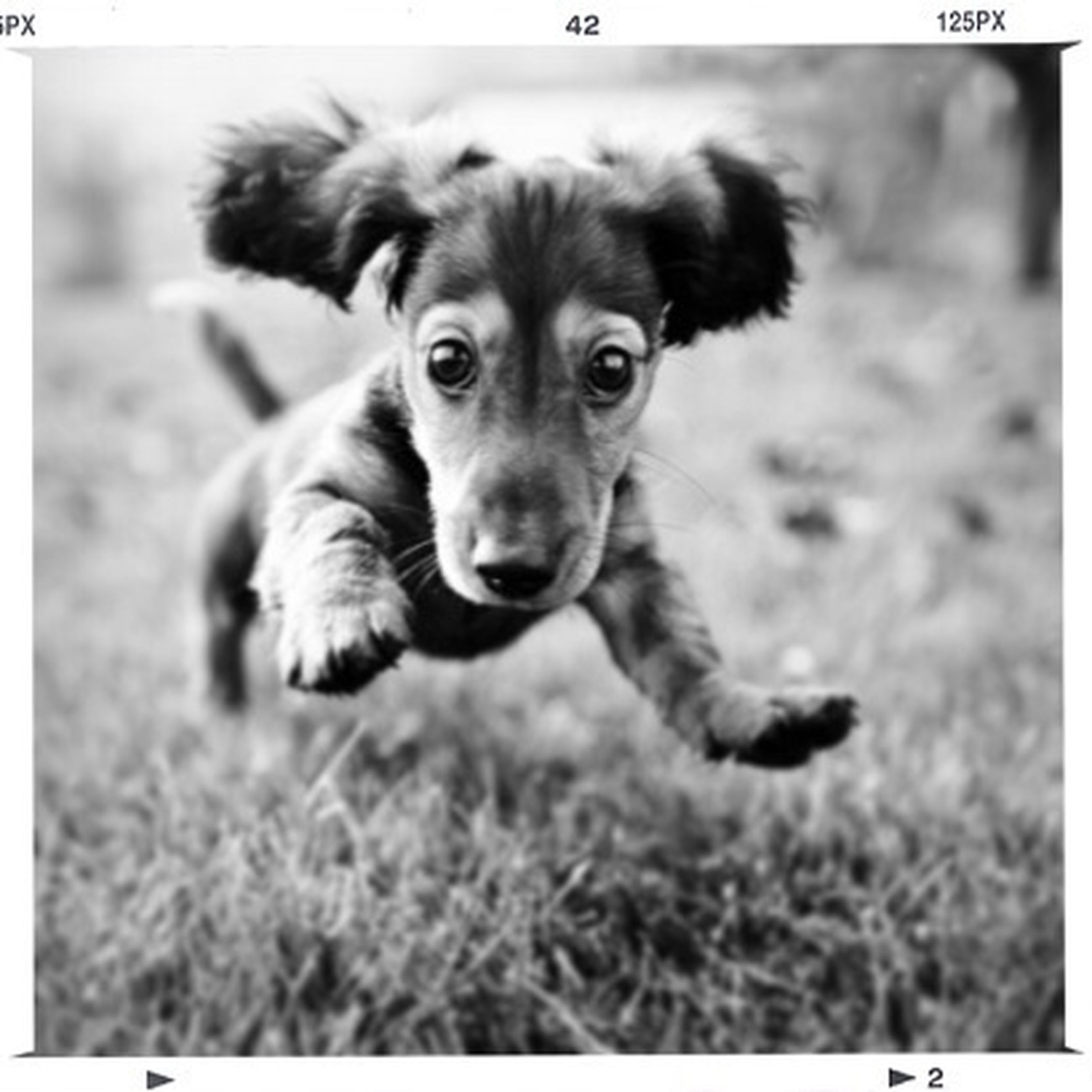 dog, pets, one animal, animal themes, domestic animals, grass, mammal, looking at camera, transfer print, field, portrait, auto post production filter, grassy, focus on foreground, selective focus, close-up, sitting, puppy, cute, day