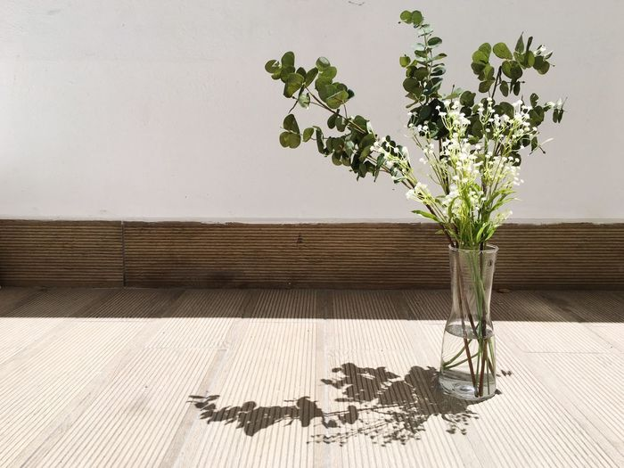 Some shadows speak more reality. Copy Space EyeEm Best Shots Eye4photography  EyeEm Gallery Plant Growth Nature No People Wall - Building Feature Tree Sunlight Flower Flowering Plant Leaf Shadow Day Beauty In Nature Plant Part Freshness Flower Arrangement Vulnerability