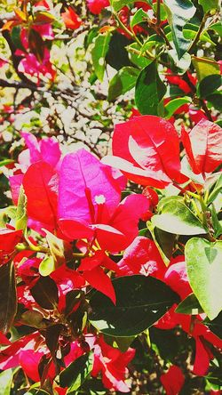 flowers Leaf Red No People Day Nature Flower Outdoors Growth Petal Beauty In Nature Full Frame Close-up Plant Fragility Freshness Flower Head