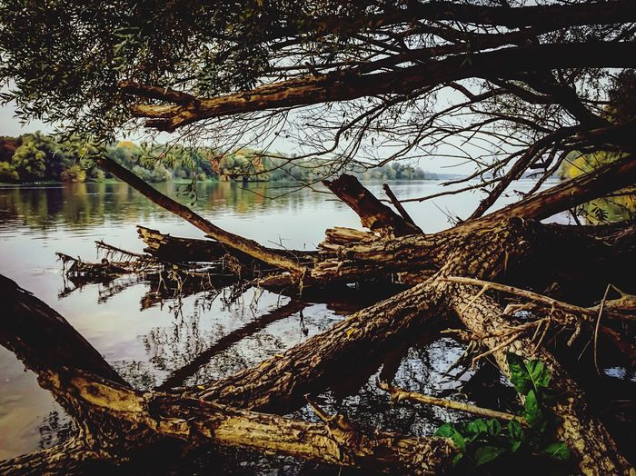Photography Day Reflection Tree Nature Water Tranquility Tranquil Scene Beauty In Nature Branch Dead Tree Sky