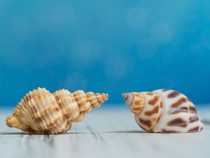 Indoors  Sweet Food Still Life Blue Indulgence Freshness No People Blue Background Temptation Colored Background Studio Shot Table Close-up Copy Space Seashells Copy Space
