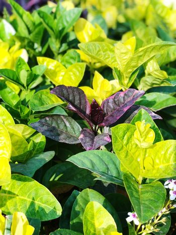 Leaf Green Color Growth Nature Plant Outdoors No People
