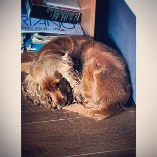 Layla 😍 Lookslikeaball Cute CuteBall Like Beautiful Dog Love My Follow Like4follow Followme Follow4like @tagsforlikes Best  Face Cutest