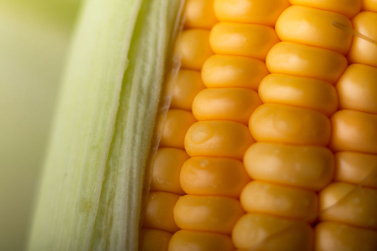 Close-up Corn Corn On The Cob Day Food Food And Drink Freshness Healthy Eating High Angle View Indoors  Large Group Of Objects No People Order Raw Food Selective Focus Still Life Sweetcorn Vegetable Wellbeing Yellow