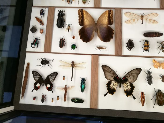 EyeEm Selects Animal Butterfly - Insect No People Animal Themes Indoors  Close-up Museum Of Natural History