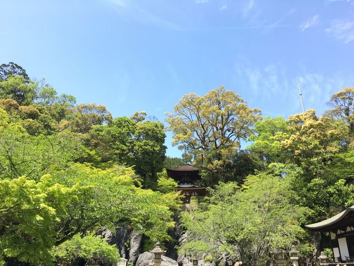 Architecture Beauty In Nature Green Color Growth Ishiyamadera No People Outdoors Sky Temple