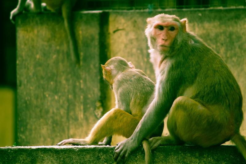 Monkey Love Togetherness Parents ❤❤❤ Care Free Living ❤ Teacherslife EyeEm Best Shots