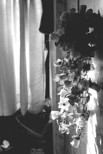 Feeling Thankful Black & White
