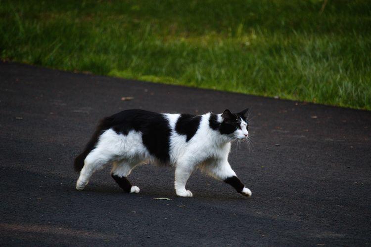 Cat on road