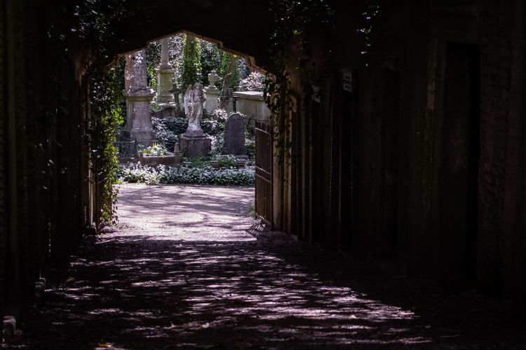 Architecture Built Structure Building No People The Way Forward Direction The Past History Building Exterior Religion Footpath Nature Entrance Sculpture Art And Craft Day Belief Spirituality Statue Plant Outdoors Architectural Column Angel Highgate Cemetery Cemetery Light And Dark