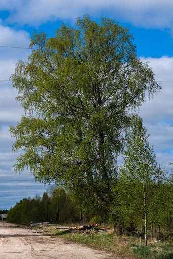 Tree Plant Sky Growth Beauty In Nature Nature Land Cloud - Sky Day Tranquility Tranquil Scene No People Outdoors Field Green Color Scenics - Nature Non-urban Scene Landscape Environment Blue