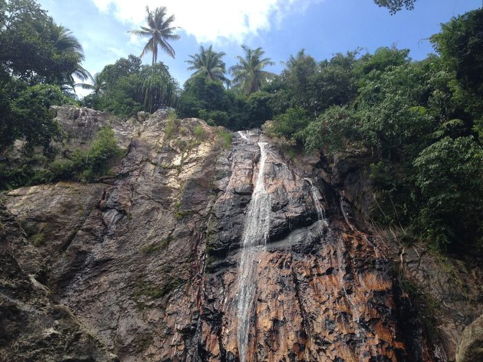 Tree Rock Nature Land Plant Forest Environment Growth Outdoors No People Beauty In Nature Travel Scenics - Nature Rock - Object Tranquility Waterfall Non-urban Scene Cliff Adventure Foliage Formation Leaves Flowing Water