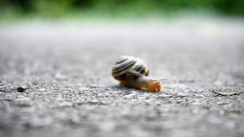 Snail Snail Animal Wildlife Selective Focus Close-up Macro Macro Photography Snails Pace Outdoors Growth Beauty In Nature Fragility Nikond5300 Summer Time  Summer No People Flower Plant Green Color Thorn Leaf Springtime Spiked Flower Head Nature Farm