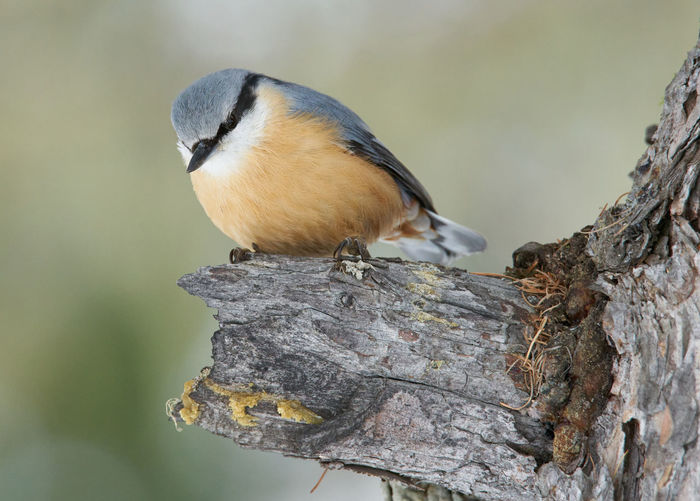 Close-up of a bird perching on tree trunk