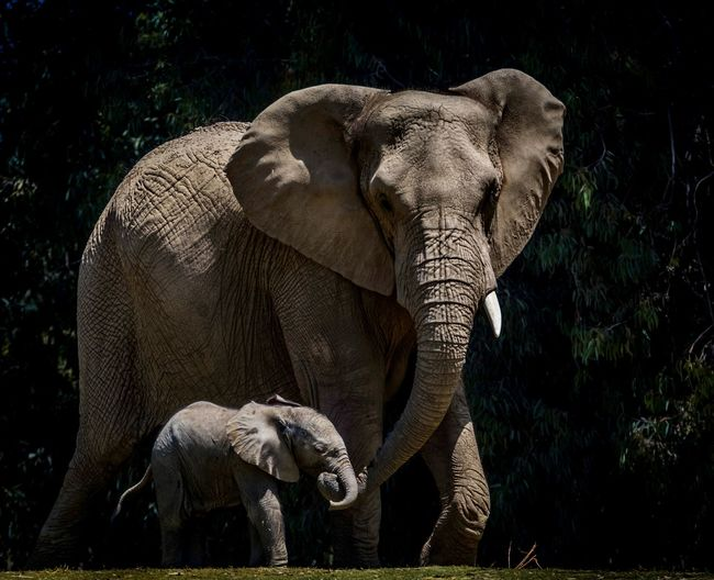 Mother and calf elephant in a forest