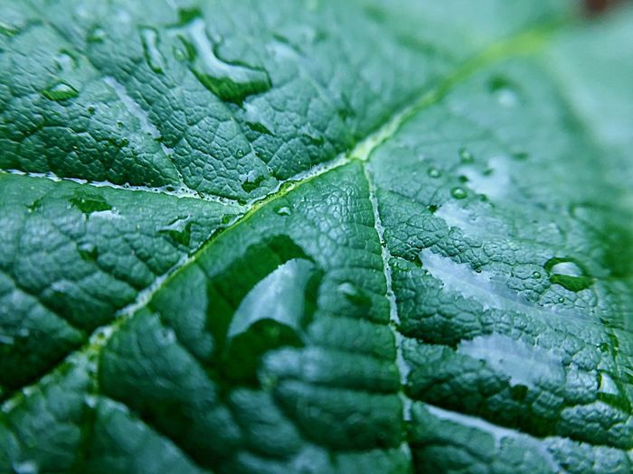 After The Rain Leaf Plant Part Green Color Drop Water Close-up Full Frame Nature Growth Backgrounds Plant No People Leaf Vein Wet Beauty In Nature Selective Focus Day Natural Pattern Freshness Outdoors