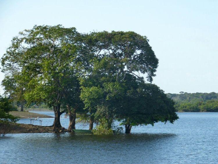 Relaxing Amazonas