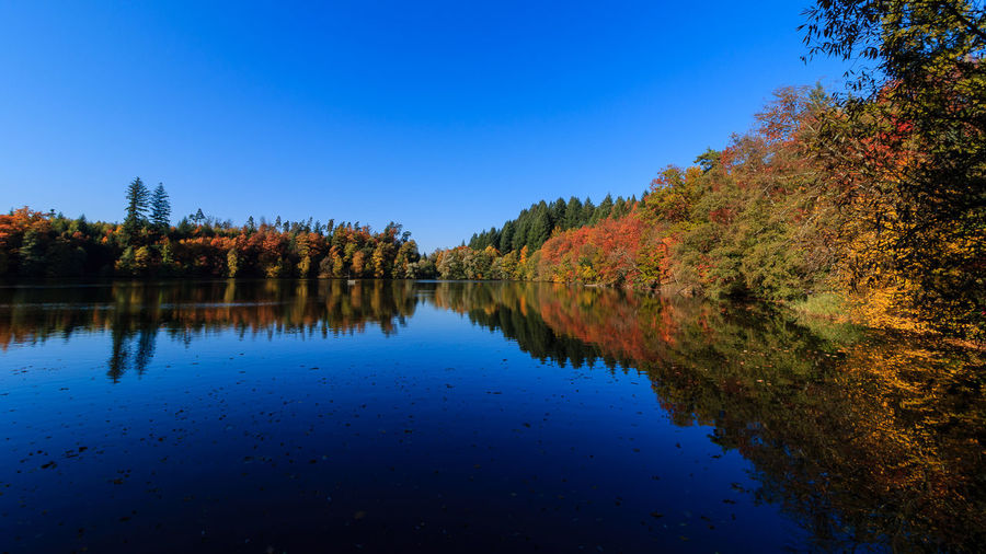 Bergsee im Herbst Schwarzwald Autumn Beauty In Nature Black Forest Blue Change Clear Sky Day Growth Lake Leaf Nature No People Outdoors Reflection Scenics Sky Standing Water Tranquil Scene Tranquility Tree Water Waterfront