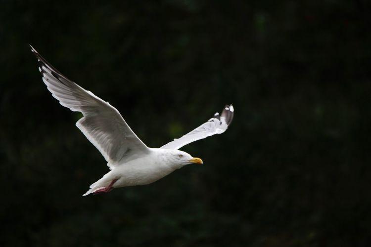 Flying Spread