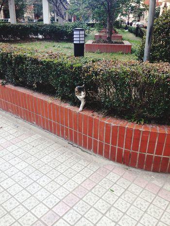 mycat♥ ごにアパートのこうえんのなかがいます(I learning japan language is it right❓) Taking Photos Animal Mycat♥ Cute♡ Cutecats Language