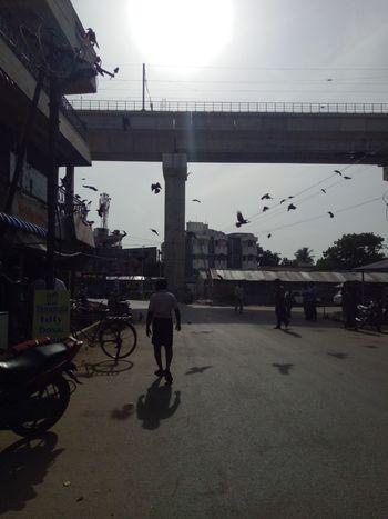 Street Photography NatureSun light Crown Flying awesome that reflections so nice man casual walk Taking Photos Alandur Chennai