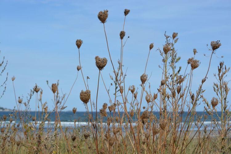 Beach Nahant Beach Nature Ocean Tall Grass
