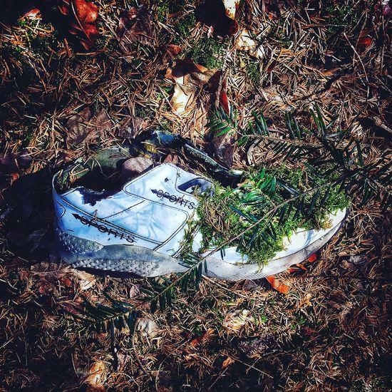 Abandoned Woodwalking Nosports