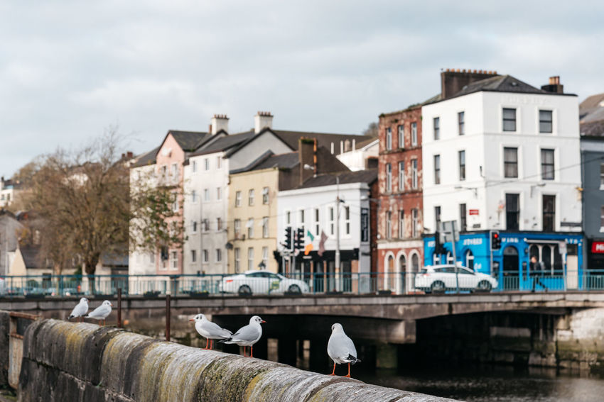Bridge in Cork Cork Nature Travel Wild Atlantic Way Animal Animal Themes Architecture Building Building Exterior Built Structure Canal City Cloud - Sky Day Irish Kerry Landscape Nature Outdoors Residential District River Scenics Sky Tourism Town Transportation Vertebrate Water