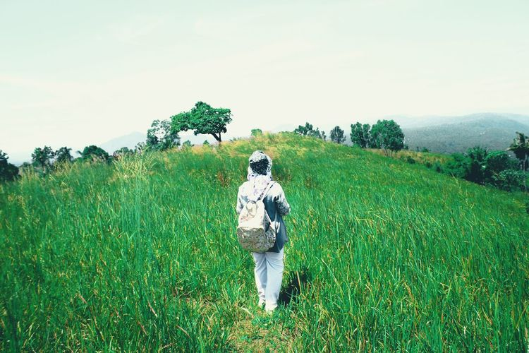 Aua sarumpun peak Peak Green Green Color Scenery Agriculture Field Growth Crop  Green Color Scarecrow Rural Scene Cereal Plant One Person People Front View Nature Walking One Man Only Adult Plant Shades Of Winter