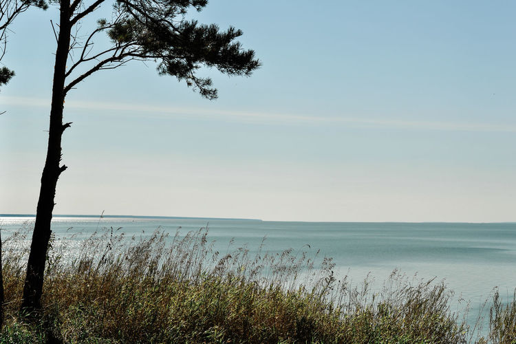 Beach Beauty In Nature Day Grass Growth Horizon Horizon Over Water Land Marram Grass Nature No People Non-urban Scene Outdoors Plant Scenics - Nature Sea Sky Tranquil Scene Tranquility Tree Water