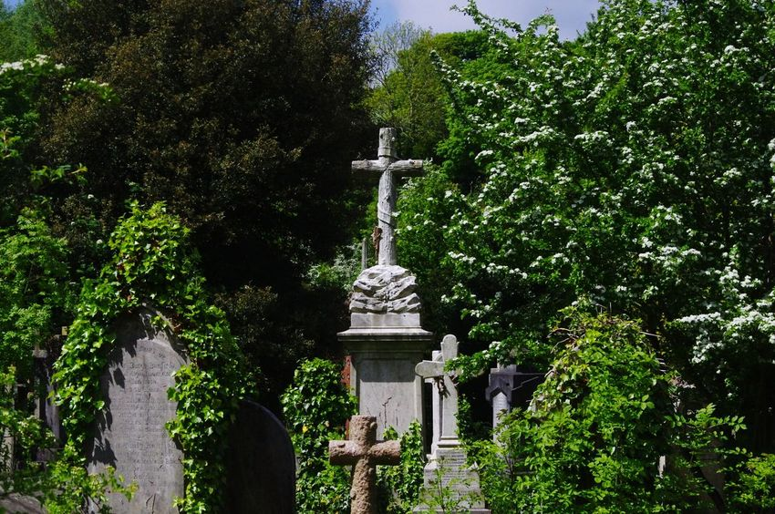 Walking Around The Cemetery Bristol Uk Run Down Cemetery Urban Landscape Yeah Springtime! Nature On Your Doorstep Nature