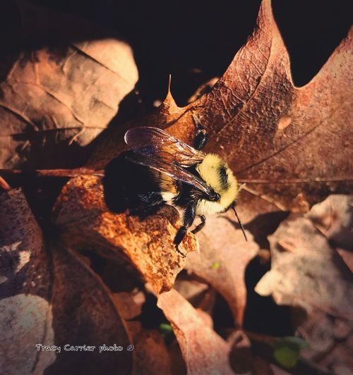 Insect Animal Themes One Animal Animals In The Wild Leaf No People Nature Close-up Day Outdoors Spring Awakened Freshness Beauty In Nature Forest Find