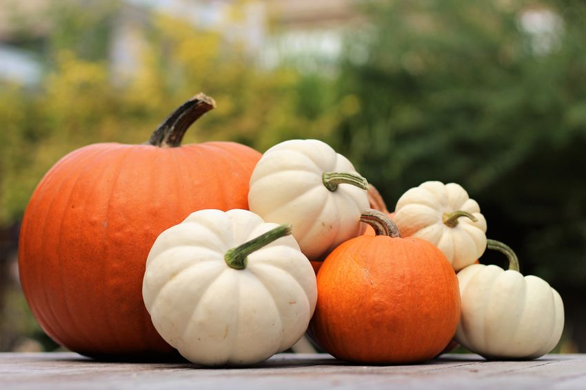 Autumn Fall Colors Nature Pumpkins Autumn Stilllife Beauty In Nature Close-up Day Focus On Foreground Food Food And Drink Freshness Fruit Healthy Eating Nature No People Orange Color Outdoors Plant Pumpkin Raw Food Still Life Table Vegetable Wellbeing