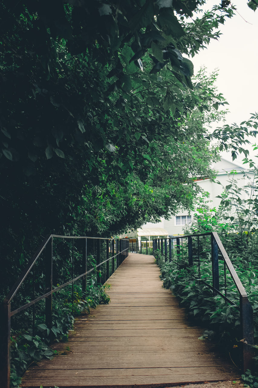 plant, tree, direction, the way forward, railing, nature, growth, architecture, bridge, forest, footpath, day, no people, footbridge, built structure, green color, beauty in nature, wood - material, tranquility, connection, outdoors, wood, diminishing perspective, long