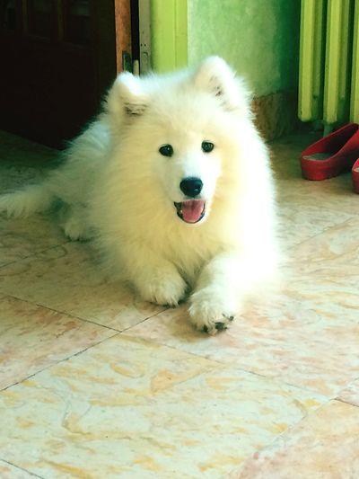 My dog !!!! 🐾🐾🐾🐾🐾