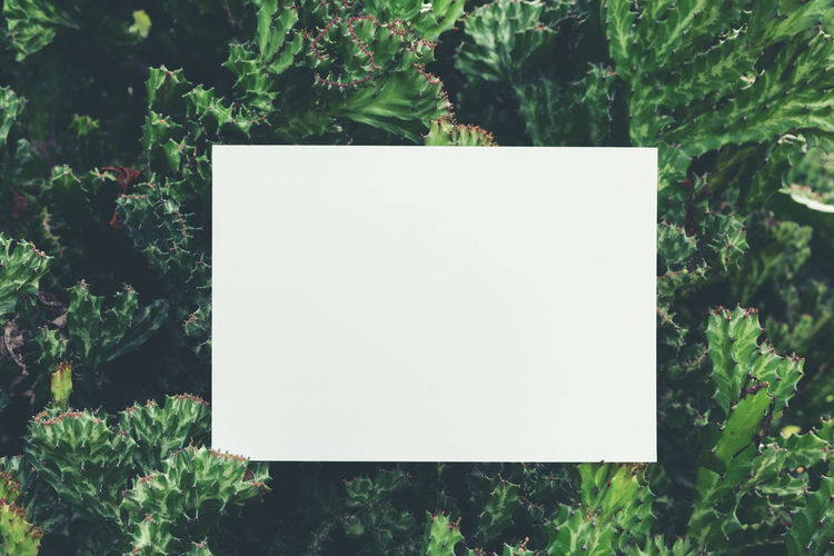 Blank Plant Paper No People Nature Green Color Day White Color Copy Space Growth Close-up Tree Outdoors Plant Part Leaf Communication Focus On Foreground White Geometric Shape Sign Message