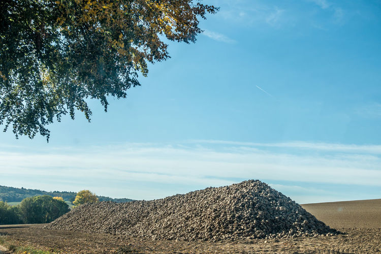 Beet pile in the field Sky Tree Plant Cloud - Sky Nature Tranquility Day Land No People Landscape Sunlight Beauty In Nature Scenics - Nature Environment Tranquil Scene Outdoors Field Agriculture Growth Blue Pile Sugar Beet
