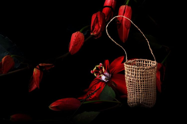 Traditional Aboriginal Culture Hand Woven Basket North Queensland, Australia Passion Flower And Black Background Studio Lighting Traditional Aboriginal Culture EyeEmNewHere