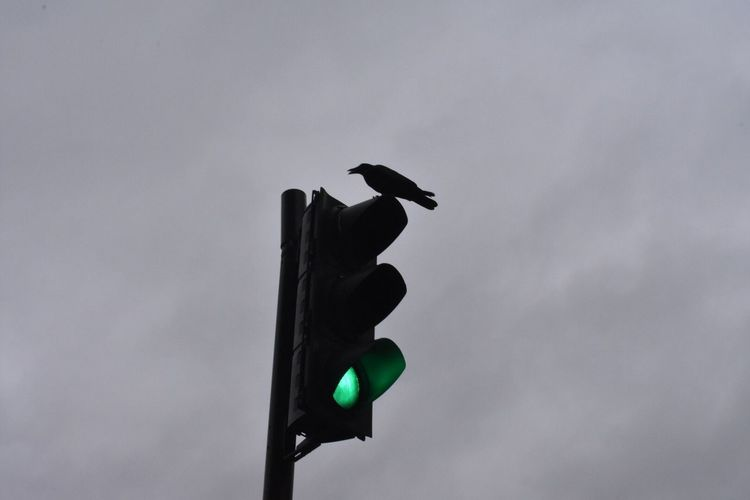 EyeEmNewHere Crow Green Light Directly Above Low Angle View go if you dare