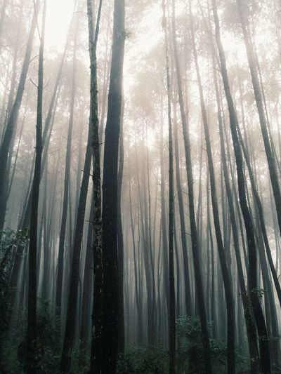 Fog In The Trees Vscocam #vsco Hugging A Tree The Moment - 2014 EyeEm Awards