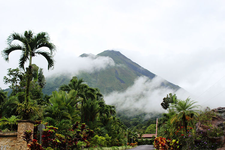 Scenic view of palm trees and mountains against sky