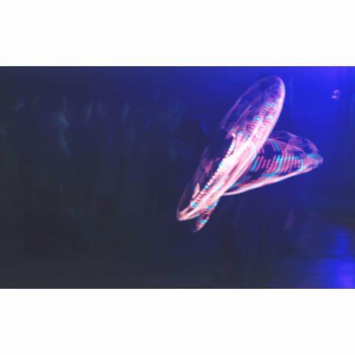 Light Hadra Trance Timelapsephotography Timelapse Film Photography Nightphotography Night Underwater Sea Life Jellyfish Swimming One Animal No People Animal Themes