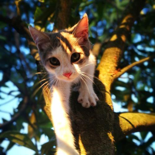 milù Pets Tree Domestic Cat Feline Close-up Kitten Animal Eye Cat Yellow Eyes Animal Face Young Animal