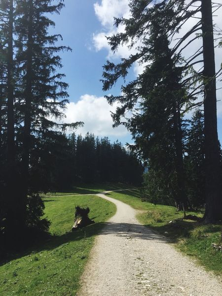 Hiking trail on mountain Unternberg in the Bavarian alps Tree Road Growth The Way Forward Day Nature Grass Sky Landscape Tranquility Real People Outdoors Scenics Beauty In Nature Unternberg Bavarian Landscape Bavarian Alps Bavarian Bavaria Germany🇩🇪 Hiking Trail