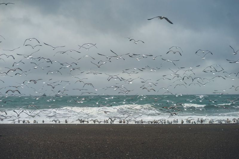 Seagulls at the shore with waves Water Sea Bird Large Group Of Animals Vertebrate Animal Themes Sky Group Of Animals Beauty In Nature Beach Animals In The Wild Animal Wildlife Land Animal Horizon Over Water Flock Of Birds Flying Nature Scenics - Nature