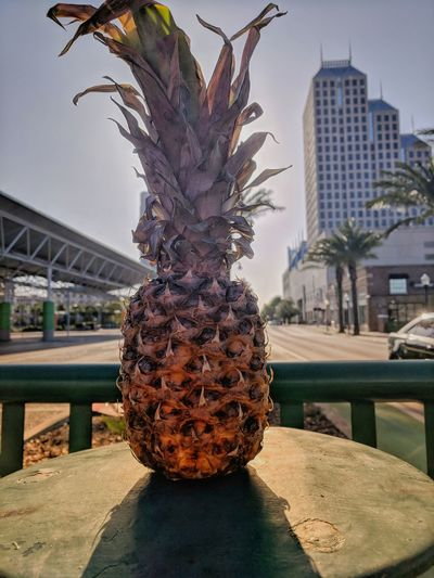 Pineapple not under the sea Pineapple Orlando Downtown Fruit Florida City Tree Business Cityscape Skyscraper Architecture Sky Built Structure Office Building Modern Art Downtown District Tropical Fruit High Rise Urban Skyline