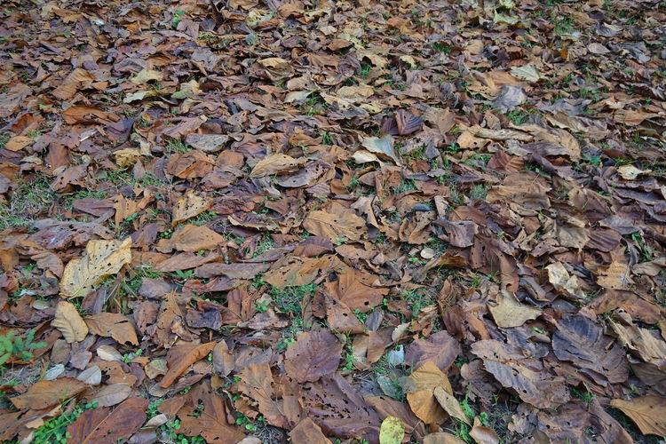 Dry Leaf On The