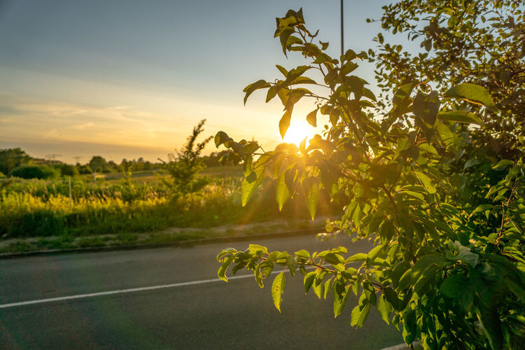 sunset over an agricultural field Tranquility Green Color Landscape Field Land Road Sun No People Tranquil Scene Sunlight Nature Beauty In Nature Growth Plant Sky Outdoors Tree Sunset Scenics - Nature Sunbeam Lens Flare EyeEm Best Shots EyeEm Nature Lover